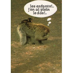 """CARTE POSTALE VIERGE HUMOUR COLLECTION """" LYNA """" SERIE 894-2"""