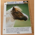 """FICHE FASCICULE """" A CHEVAL CHEVAL PRATIQUE N° 7 """"pressentir le caractère d'un cheval"""