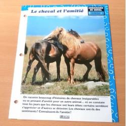 """FICHE FASCICULE """" A CHEVAL CONNAISSANCE DU CHEVAL N° 3 """" le cheval et l'amitié"""