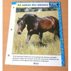 """FICHE FASCICULE """" A CHEVAL CONNAISSANCE DU CHEVAL N° 1 """" la saison des amours"""