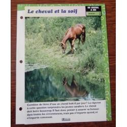 """FICHE FASCICULE """" A CHEVAL UN CHEVAL A SOI N° 37 """" le cheval et la soif"""