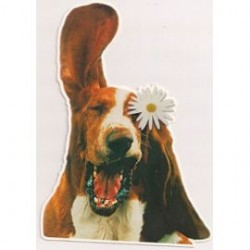 Carte postale NEUVE - humour chien anniversaire fêtes en tout genre neuve
