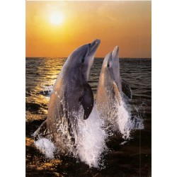 CARTE POSTALE NEUVE 13.5 X 19 CM dauphin coucher du soleil ANNIVERSAIRE FETE EN TOUT GENRE NEUVE