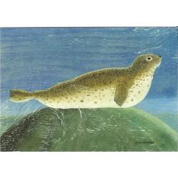 CARTE POSTALE NEUVE 12 X 17 CM collection DRIFTWOOD ART seal neuve