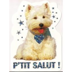 Carte postale - p'tit salut - chien anniversaire fête en tout genre neuve