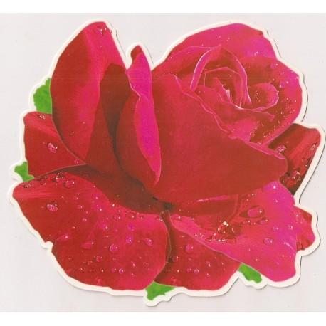 Carte postale NEUVE - rose rouge