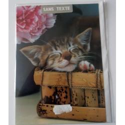 Carte postale neuve avec enveloppe fête anniversaire SANS TEXTE CHAT (lot 16.01)
