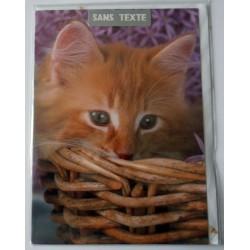 Carte postale neuve avec enveloppe fête anniversaire SANS TEXTE CHAT (lot 16.02)