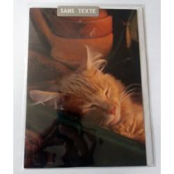 Carte postale avec enveloppe fête diverses anniversaire SANS TEXTE CHAT 01 neuve