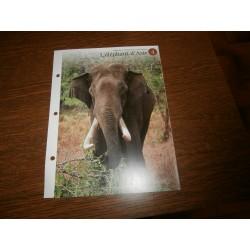 """FICHE FASCICULE """"a la découverte du monde sauvage"""" l'éléphant d'afrique 4 collection occasion"""