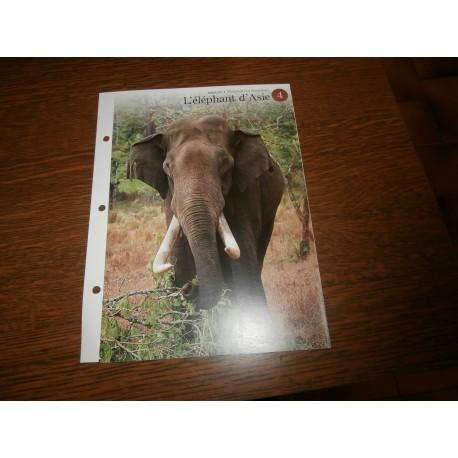 """FICHE FASCICULE """"a la découverte du monde sauvage"""" l'éléphant d'afrique"""