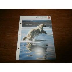 """FICHE FASCICULE """"a la découverte du monde sauvage"""" l'ours polaire 9 collection occasion"""