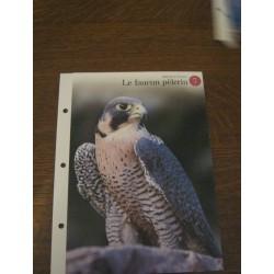 """FICHE FASCICULE """"a la découverte du monde sauvage"""" le faucon pèlerin 7 collection occasion"""