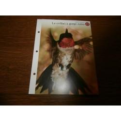 """FICHE FASCICULE """"a la découverte du monde sauvage"""" le colibri a gorge rubis 17 collection occasion"""