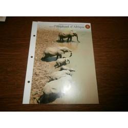 """FICHE FASCICULE """"a la découverte du monde sauvage"""" sauver l'éléphant d'Afrique 8 collection occasion"""