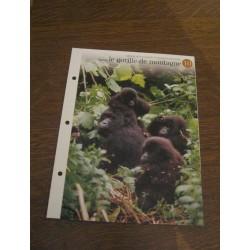 """FICHE FASCICULE """"a la découverte du monde sauvage"""" sauver le gorille de montagne 10"""