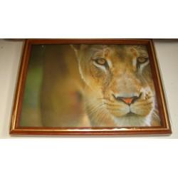 Cadre sous verre décoration savane lionne sauvage idée cadeau original anniversaire emballé neuf