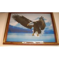 Cadre sous verre décoration aigle faucon idée cadeau original anniversaire emballé neuf