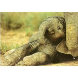 CARTE POSTALE 13.5 X 19 CM ELEPHANTEAU ANNIVERSAIRE FETES EN TOUT GENRE NEUVE