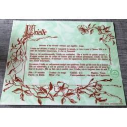 """Signification du prénom """" URIELLE """" idée cadeau fête des mères grand mères anniversaire noel Neuf"""