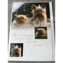 Carte postale avec enveloppe fête diverses anniversaire retraite etc....harmonie chien neuve